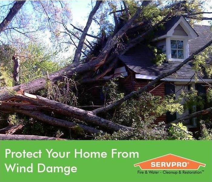 A house with a tree on top of it after storm with SERVPRO logo